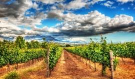 Bible milovníka vína: Kam se vydat v Kalifornii za nápojem z hroznů
