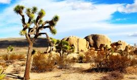 Joshua Tree: Divočina plná přírodních skvostů, které okouzlily i kapelu U2