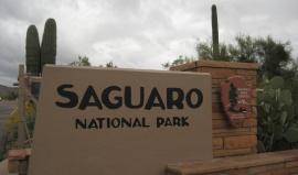 Kaktusové zahrady Arizony