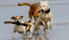 """5 nejlepších """"Dog Friendly"""" pláží v Americe"""