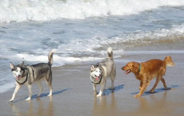 Huntington Dog Beach, Kalifornie