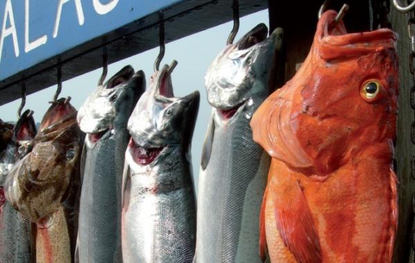 Aljaška ryby