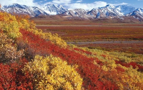 Aljaška krajina