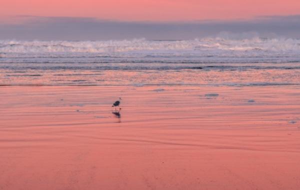 Manzanita Beach v Oregonu, USA.
