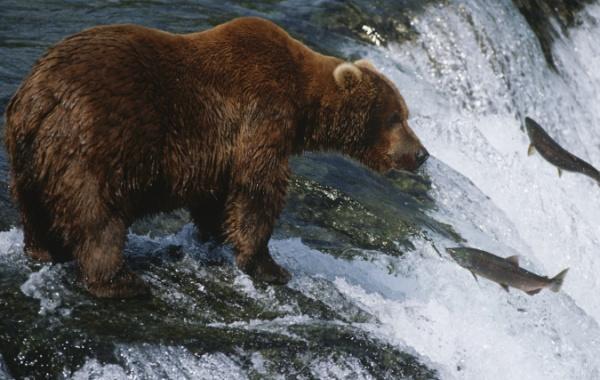 Jak se loví ryby na Aljašce #Cestování