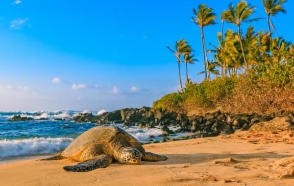 Kdo se opaluje na havajských plážích