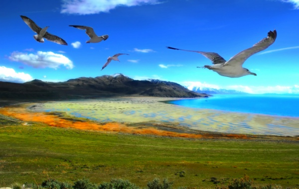 To jsou věci, na Velkém solném jezeře žijí bizoni a kojoti