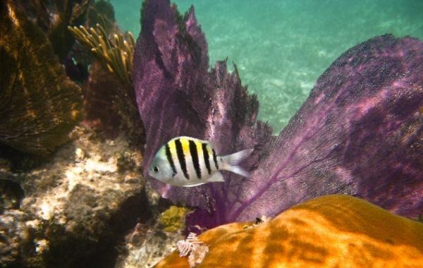 Coral Reef State Park, Florida - Amerika.cz