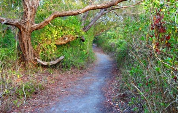 Jedna z naučných stezek v národní parku Everglades ve státě Florida v USA
