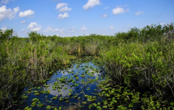 Everglades - delta