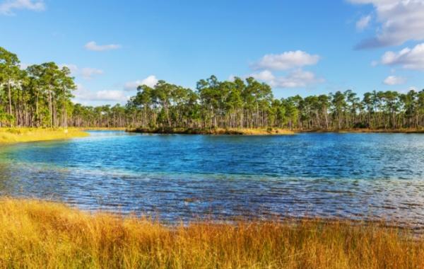 Everglades - jezero a cypřišové stromy