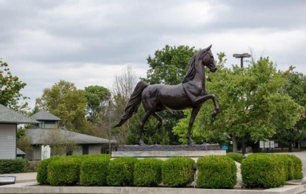 Lexington je známý zejména pro své koňské závody. Najdete tady ale také spoustu muzeí, lihovary nebo arboretum.