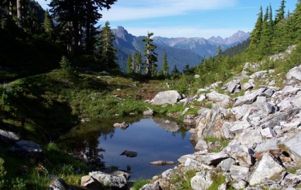 Olympic national park - údolí