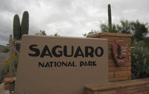 Národní park Saguaro