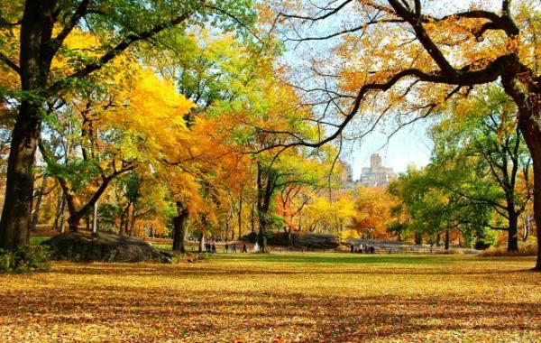 Central park na podzim.