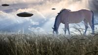 UFO a pasoucí se kůň