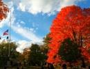 Podzimní stromy v NY.
