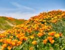 Antilopí údolí v Kalifornii