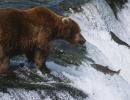 Jak se loví ryby v národním parku Katmai na Aljašce