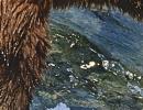 Medvědi rybaří na Aljašce