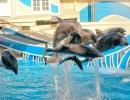 Orlando delfíni