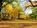 Podzim a stromy v NY.