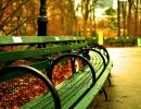 Zelená lavička v podzimním Central Parku v NY.