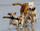 Psi na pláži v USA